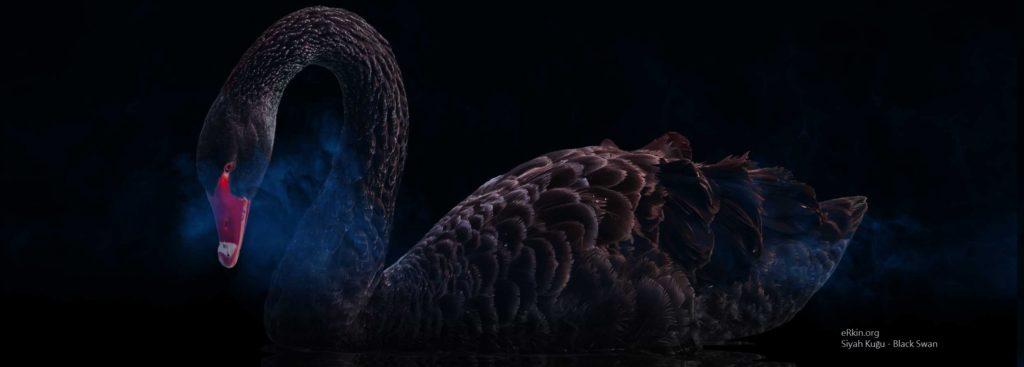 COVID-19, Black Swan (Siyah Kuğu) Doğurdu Mu?
